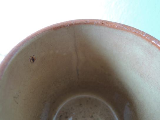 カップ(茶)-4