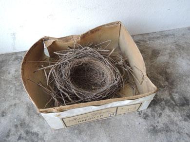 鳥の巣-2