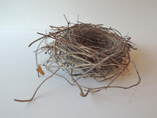 鳥の巣-1